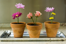 Springy Flower Pot Desserts: A Blast From My Past