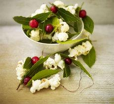 Bay, popcorn & cranberry strings